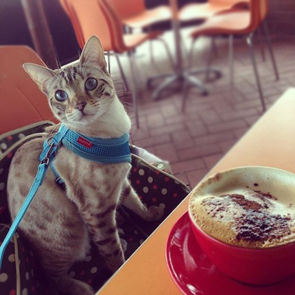 Cheetoh Cat at a cafe